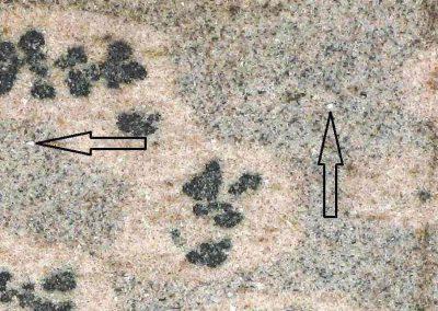 4. Detail v 3. De pijlen tonen enkele muscovietplaatjes. De vlekken bestaan vooral uit biotiet