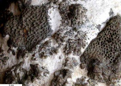 4. Deze kant van de steen toont duidelijke fossiele resten van sponzen.