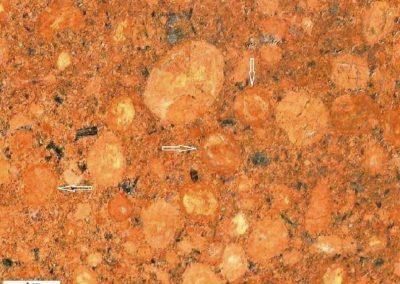 6. Detail van 5 Een steen met een duidelijke anti- rapakivistructuur. De pijlen geven enkele randen aan, die donkerder zijn dan het binnenste deel van de ovoïden.