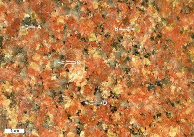 2. Detail van 1. We zien hier de 4 meest kenmerkende mineralen. A = rode kaliveldspaat, B = witgroene plagioklaas, C = grijze kwarts, D = zwarte biotiet.