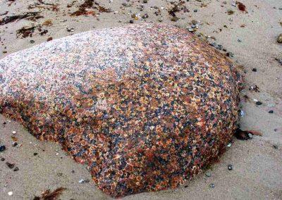 8. Filipstadgraniet. Sarup Strand. Als. Ook op deze grote steen vallen de ringen aan de buitenkant goed op.