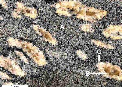 2. Detail van 1. Bovenste deel. A = Paleosoom, B = Melanosoom, C = Neosoom.